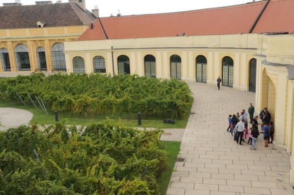 vineyards in schönbrunn palace@wienwein